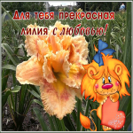 Открытка фото открытка с лилиями