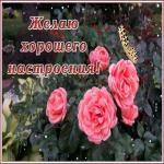 Картинка картинка для хорошего настроения с цветами