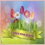 Открытка картинка с днем рождения женщине с тюльпанами