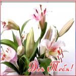 Картинка красивая лилия для тебя