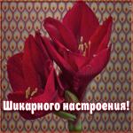 Открытка красивая открытка хорошего настроения