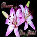 Картинка лилии для тебя от всего сердца