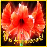 Картинка мерцающая открытка с лилиями