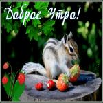 Открытка открытка доброе утро с клубникой