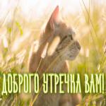 Открытка открытка доброе утро с котиком
