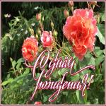 Картинка открытка гиф с днем рождения женщине с розами