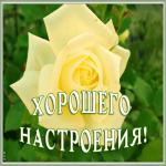 Картинка открытка хорошего настроения с розой