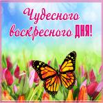 Открытка открытка приятного воскресного дня