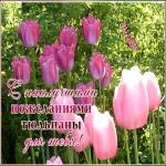 Картинка открытка розовые тюльпаны