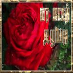 Открытка открытка с алой розой