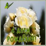 Открытка открытка с днем рождения женщине белые розы