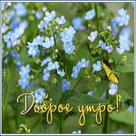 Картинка открытка с добрым утром с цветами