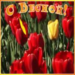 Картинка открытка с первым днем весны с красными тюльпанами