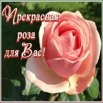 Открытка открытка с прекрасной розой для вас