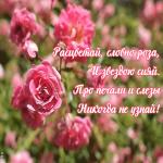 Картинка открытка с розами с красивыми словами