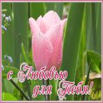 Картинка открытка с тюльпаном с любовью