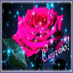 Картинка открытка скучаю с розой