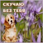 Открытка открытка скучаю с собачкой