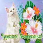 Картинка открытка воскресенье с кошкой