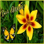 Картинка открытка желтая лилия