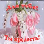 Картинка прелестные тюльпаны для тебя