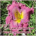 Открытка замечательная открытка с лилией