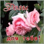 Открытка замечательная открытка с розами