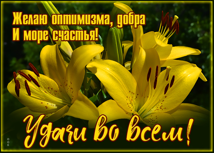 Открытка открытка красивый букет лилий