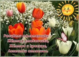 Картинка чудесная открытка с тюльпаном