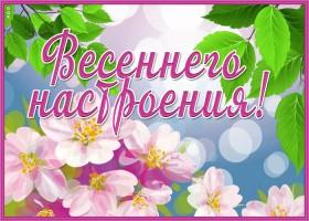 Картинка картинка весеннего настроения с розовыми цветами