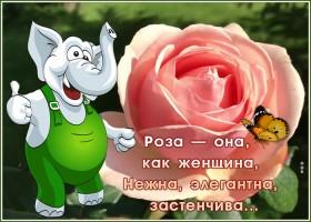 Открытка открытка роза самой милой