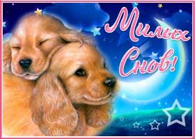 Открытка открытки спокойной ночи с животными